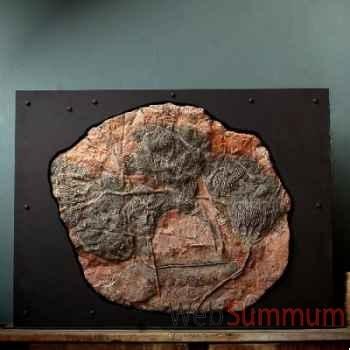 Grande plaque de crinoide Objet de Curiosité -PUFO048