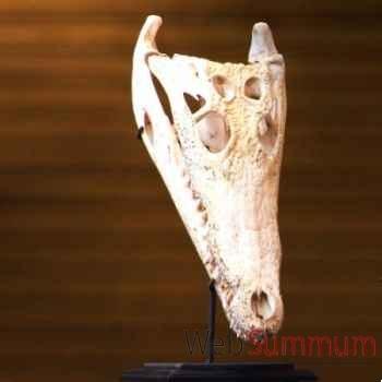 Crocodile Objet de Curiosité -AN090