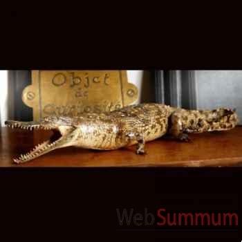 Crocodylus niloticus Objet de Curiosité -PU174