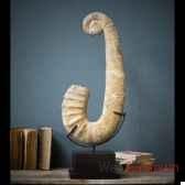 ammonite deroulee objet de curiosite pufo033 1