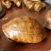 tortue realiste objet de curiosite an057