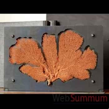 Gorgone rouge dans support plasma gm Objet de Curiosité -VE021
