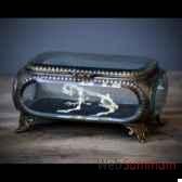 squelette de grenouille dans boite en verre objet de curiosite an139