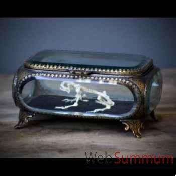 Squelette de grenouille dans boite en verre Objet de Curiosité -AN139