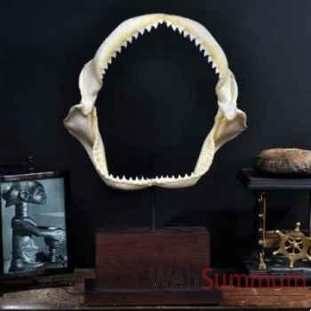 Machoire de requin (carcharinus obscurus) Objet de Curiosité -AN093