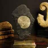 pyrite dollars sur gangue objet de curiosite mi047