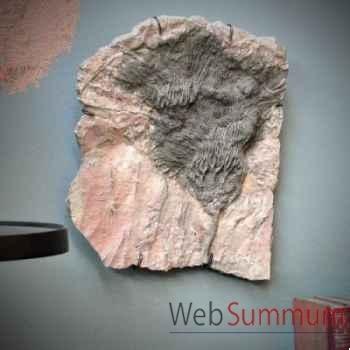 Crinoïde suspendue Objet de Curiosité -PUFO088