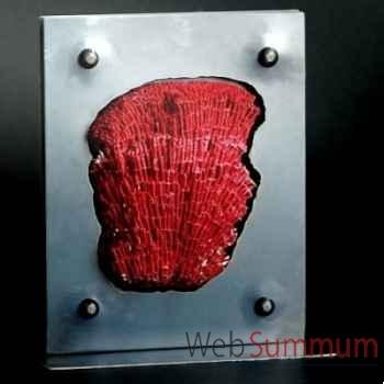 Corail rouge tubipora musica Objet de Curiosité -CO032-10