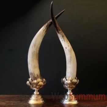 Cornes de watusi polies Objet de Curiosité -AN089