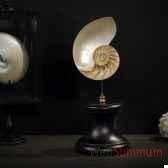 nautile objet de curiosite an005