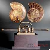ammonite sciee objet de curiosite fo002