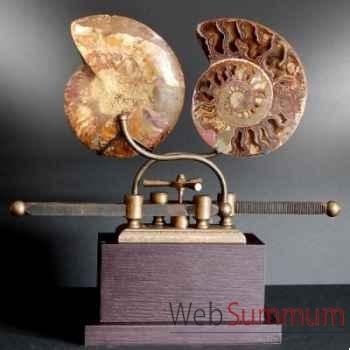 Ammonite sciée Objet de Curiosité -FO002