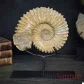 fossile objet de curiosite an004
