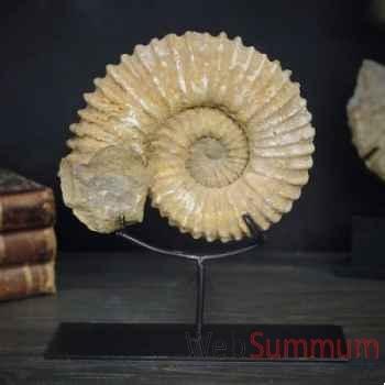Fossile Objet de Curiosité -AN004