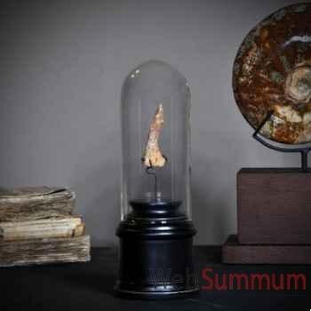 Dent de poisson scie préhistorique Objet de Curiosité -PU044