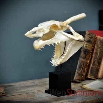 Crane complet de requin mako Objet de Curiosité -PU424-2