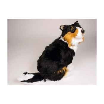 Peluche assise shetland sheepdog 50 cm Piutre -3320