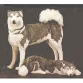 peluche debout husky de siberie 80 cm piutre 2211