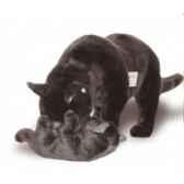 peluche debout chat bleu de russie avec chaton qui joue 60 cm piutre 2355