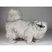 peluche debout chat persan argente 50 cm piutre 2436