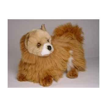 Peluche allongée chien pomeranian cm Piutre -279