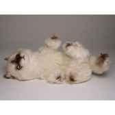 peluche chaton himalaya qui joue30 cm piutre 2367