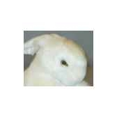 peluche lapin blanc 30 cm piutre 708