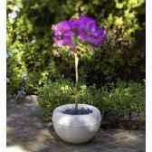 pot tulipan 23 new garden newgarden6