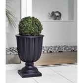 pot wisteria 14 new garden newgarden7