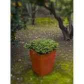 pot calendula 105 new garden newgarden30